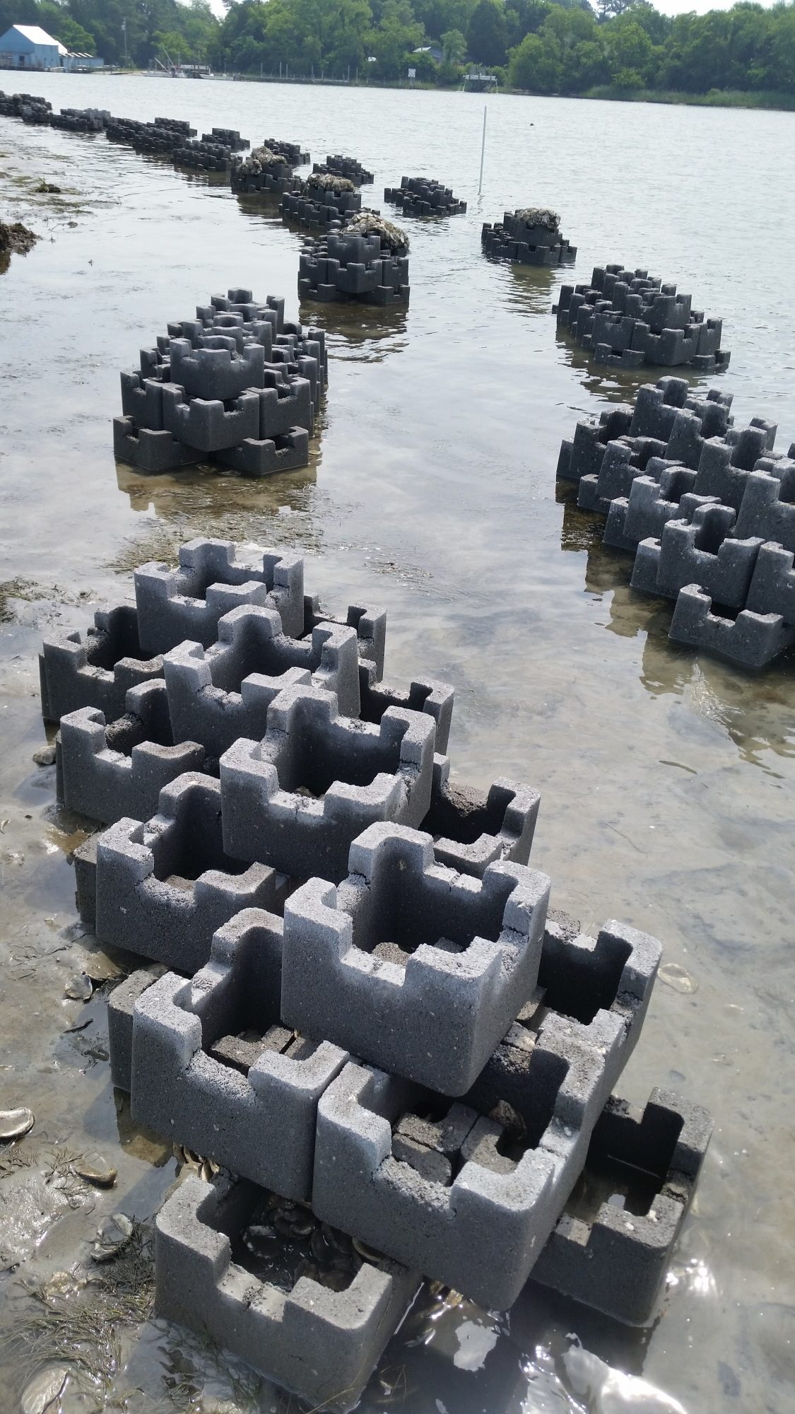 Oyster Castle Living Shoreline Project with the VMRC (3)